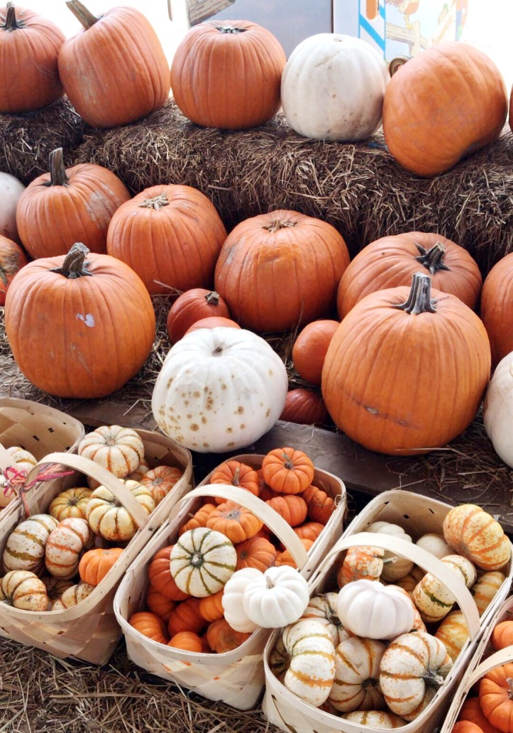 fall traditions, fall in florida, fall in the south, pumpkin picking, pumpkin patch, southern hill farm clermont, things to do in orlando, things to do in orlando in the fall, florida blogger, florida blog, orlando blogger, orlando blog,